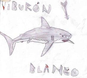 20130915213759-resized-resized-tiburonblanco.jpg